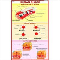 Human Blood Cell