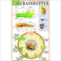 Grasshopper : Incomplete Metamorphosis
