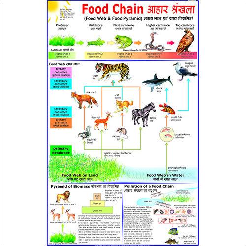 Food Chain Chart