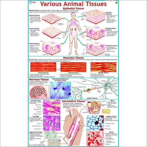 Various Animal Tissues Chart