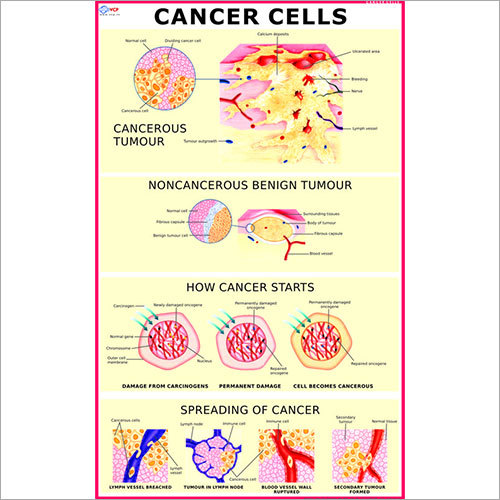 Cancer Cells Chart