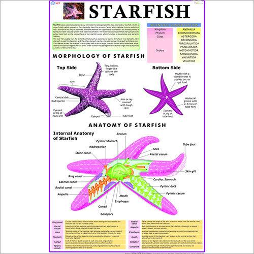 Starfish Chart