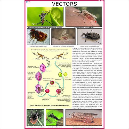 Vectors Chart