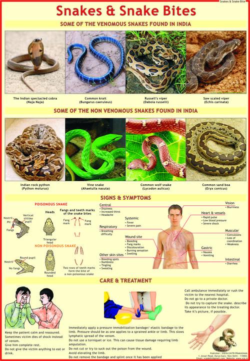 Snakes & Snake Bite Chart