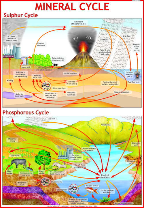Mineral Cycle Chart