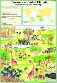 Savanna Grasslands Chart