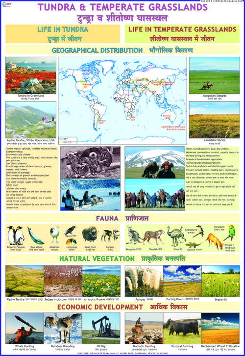 Temperate Grasslands & Tundra Chart