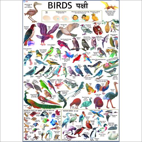 Birds Charts