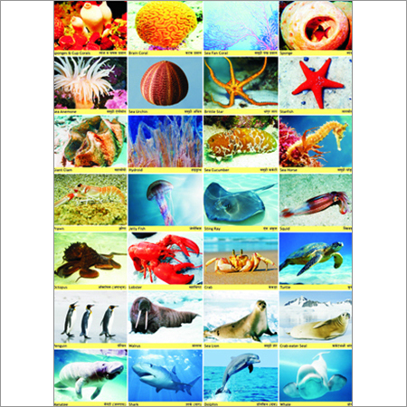 All sea animals pictures chart