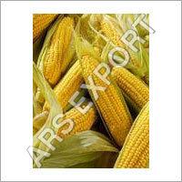 Fresh Maize Cobs