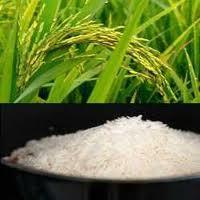 Pr 11 White Rice