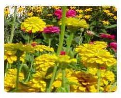 Horticulture Chlorine Dioxide
