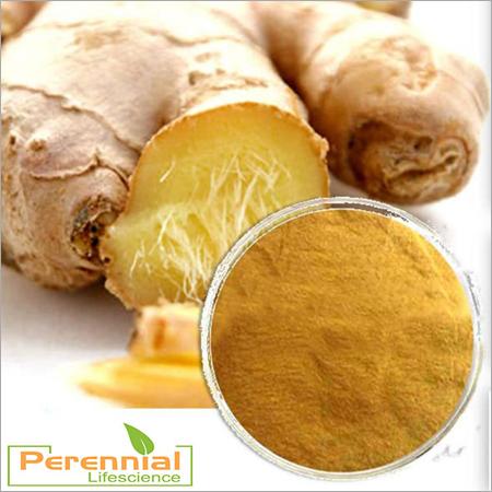 Ginger 40% Oleoresin & 25% Powder