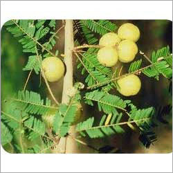 Herbal Diabetic Rejuvenator & Tonic