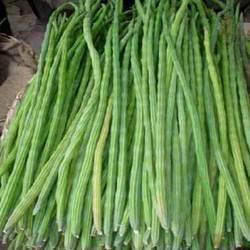 drumsticks moringa