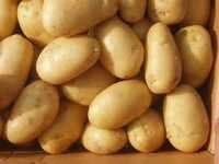 Farm Fresh Potatoes