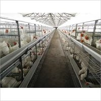 Fully Automatic Broiler Breeder Battery Cage system