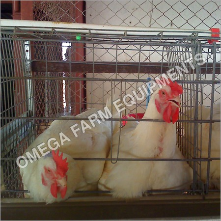 2 Tier Broiler Breeder Parent Cages
