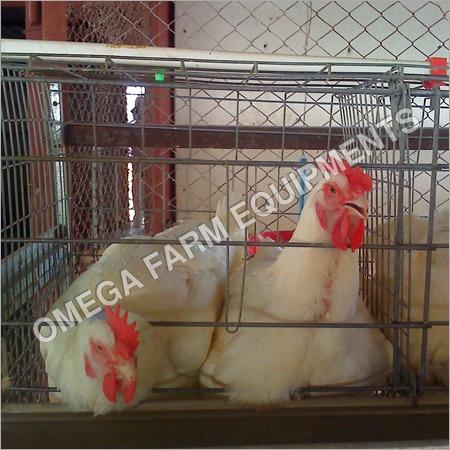2 Tier Broiler Breeder Parent Cages