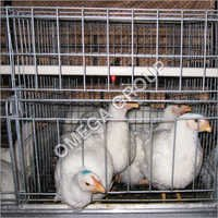 Broiler Breeder Grower Cages