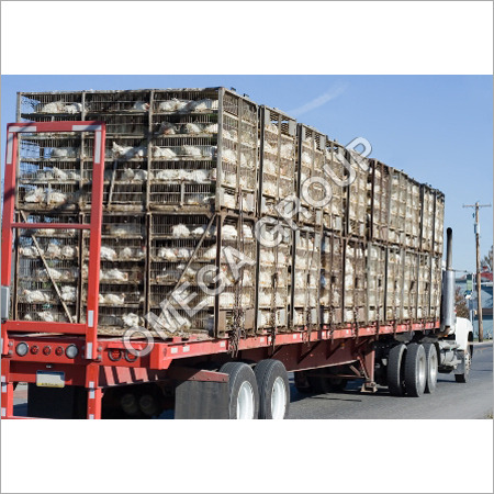 Chicken Transport Cages