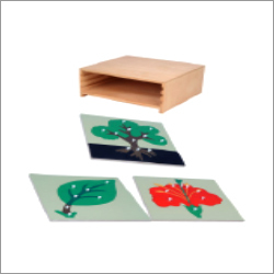Botany Puzzle With Cabinet
