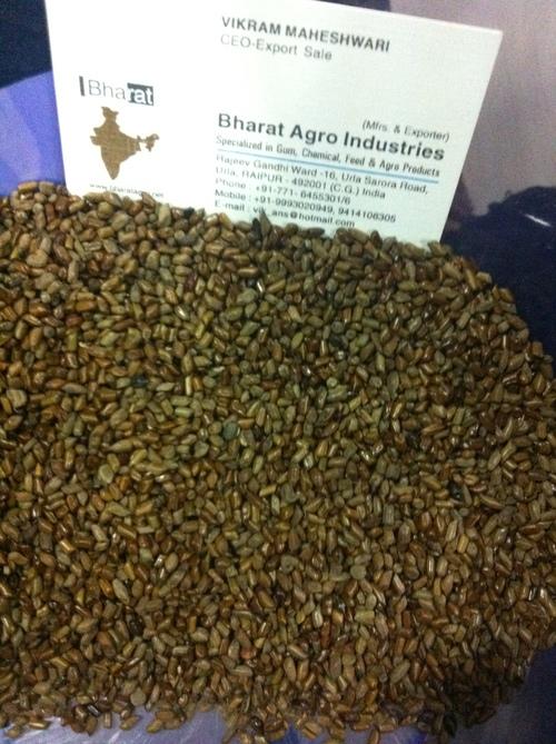 Cassia Tora Seed for Medicine