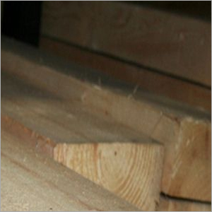 Pine Softwood