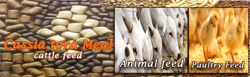 Cassia Tora Meal for Cattle Feed