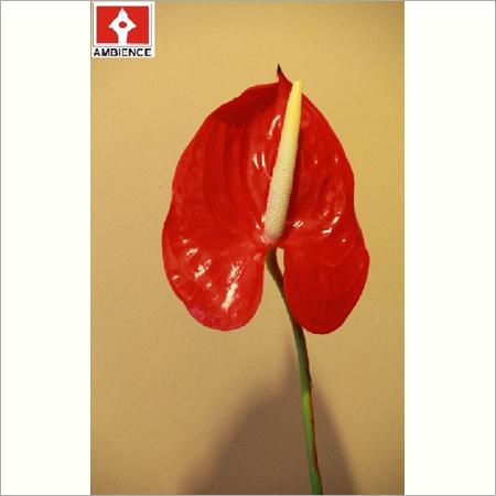 Artifical Anthurium Flower