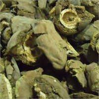 Dried Behada
