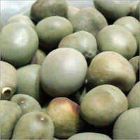 Sagargota Seeds
