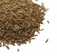Cumin Seeds Suppliers