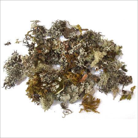 Chhadilla Herbs
