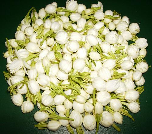 Indian Jasmine Flower