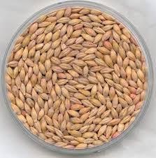Barley Price