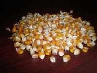 Yellow Corn Maize Suppliers