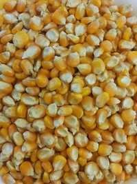 Yellow Maize Selling Price