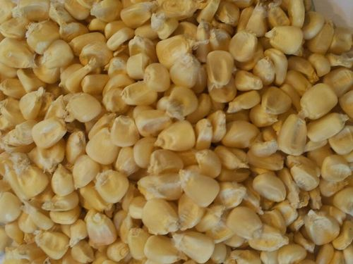 White corn Maize Price