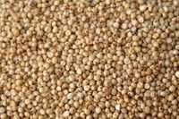 Sorghum From Indian Price