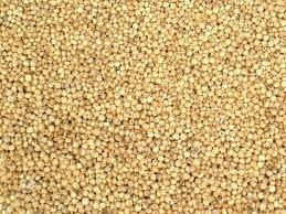 Sorghum Exporter From India