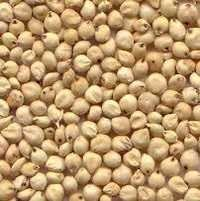 Indian Sorghum For Sale