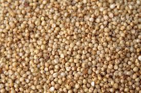 Indian Sorghum Seed