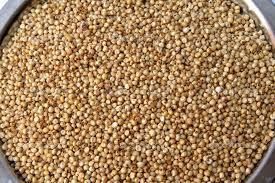 Sorghum Seeds Grains