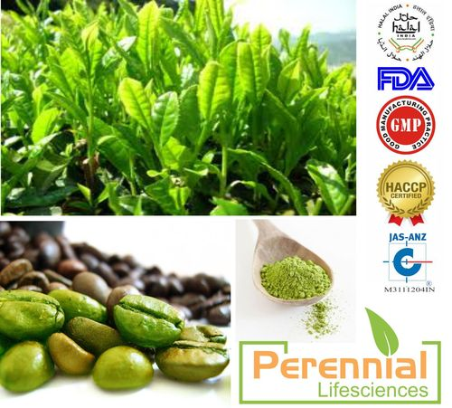 Green Coffee Extract 60% Chlorogenic acids