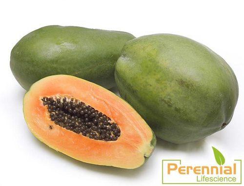 Dry Papaya Powder