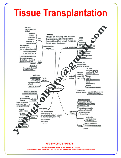 CHARTS ON PATHOLOGY. MIND MAPS IN PATHOLOGY