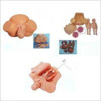 FIRST AID SKILLS TRAINING MODELS 35