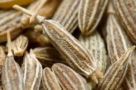 Cumin Seeds ( JEERA )