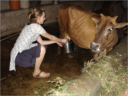 Cow Urine Therapy Services